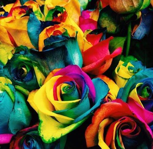 gay roses